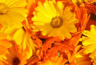 Marigold is the traditional flower of October